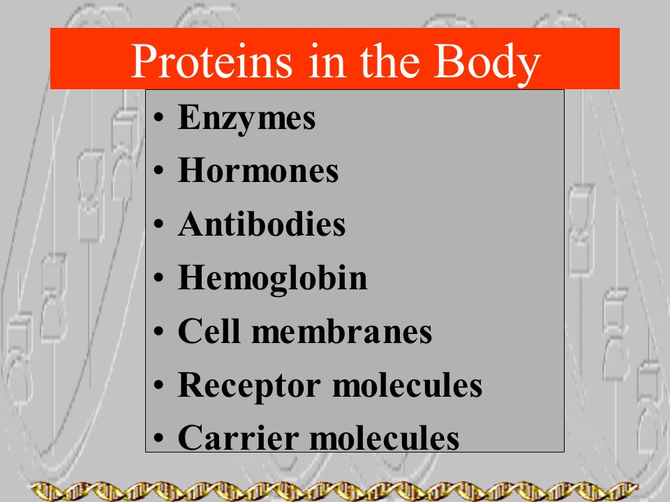 Proteins in the Body Enzymes Hormones Antibodies Hemoglobin Cell membranes Receptor molecules Carrier molecules