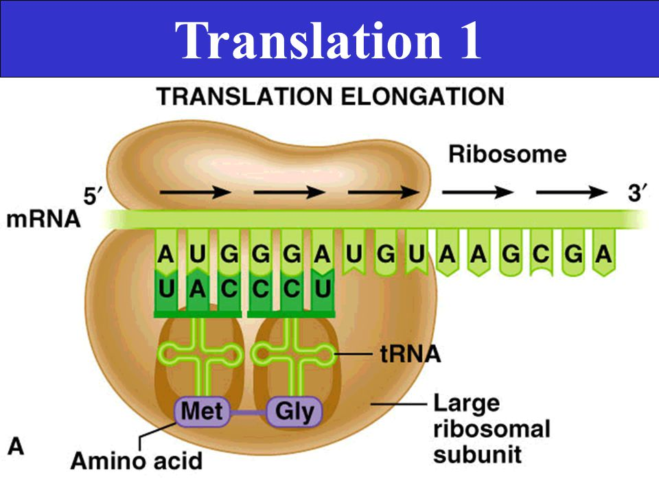 Translation 1