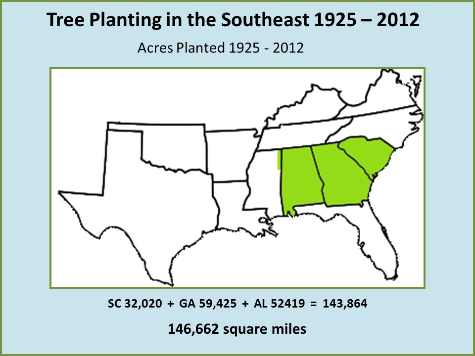 Acres Planted 1925 - 2012 146,662 square miles SC 32,020 + GA 59,425 + AL 52419 = 143,864 Tree Planting in the Southeast 1925 – 2012