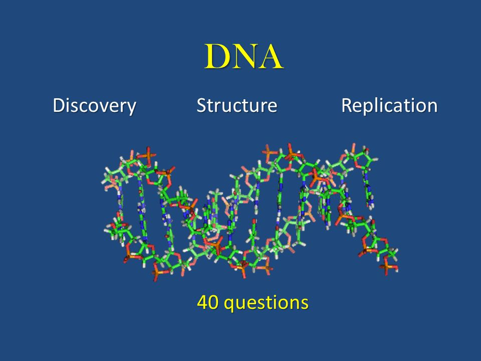DNA DiscoveryStructureReplication 40 questions