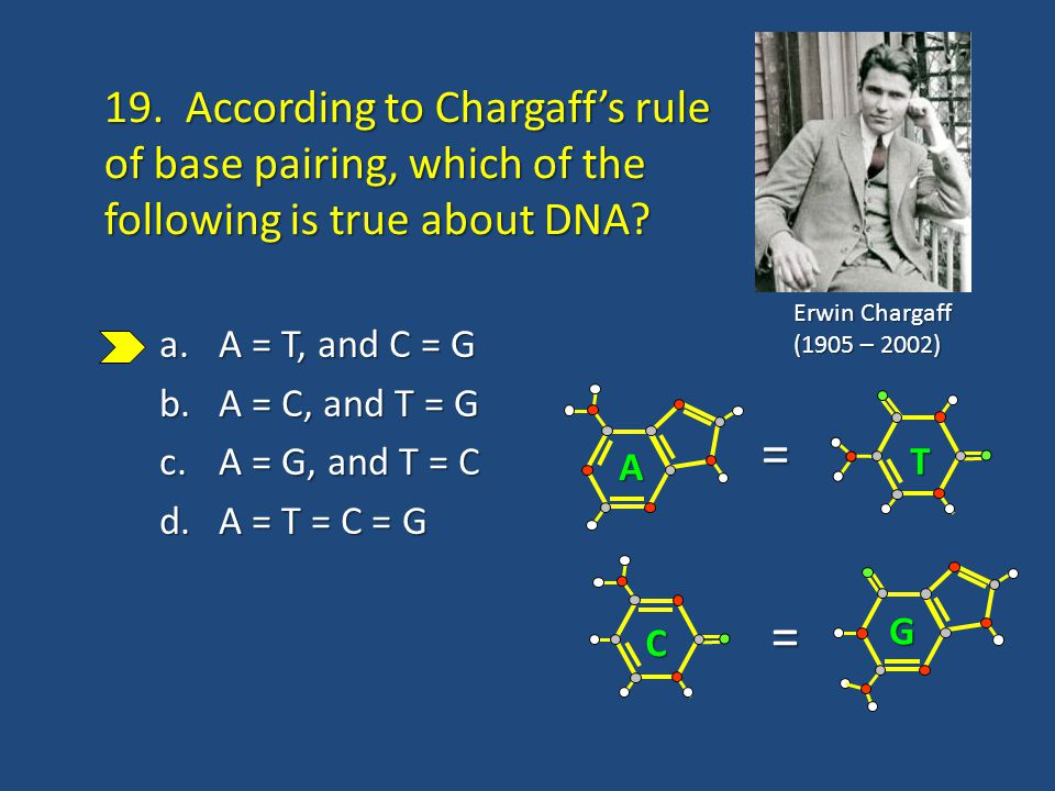 19. According to Chargaff's rule of base pairing, which of the following is true about DNA.