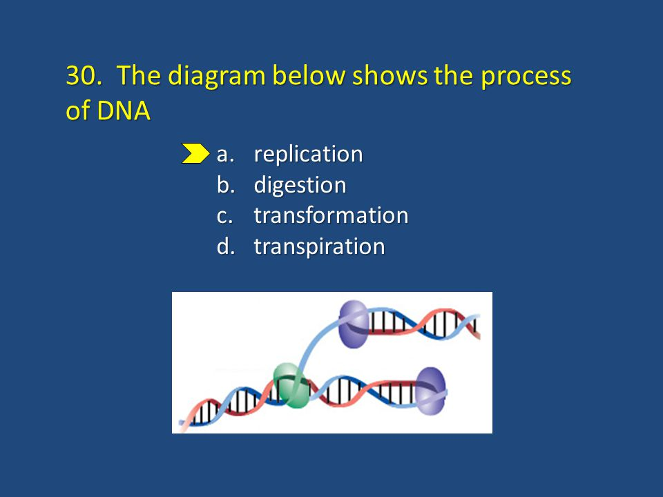 DNA DiscoveryStructureReplication 40 questions. 1. Describe the ...
