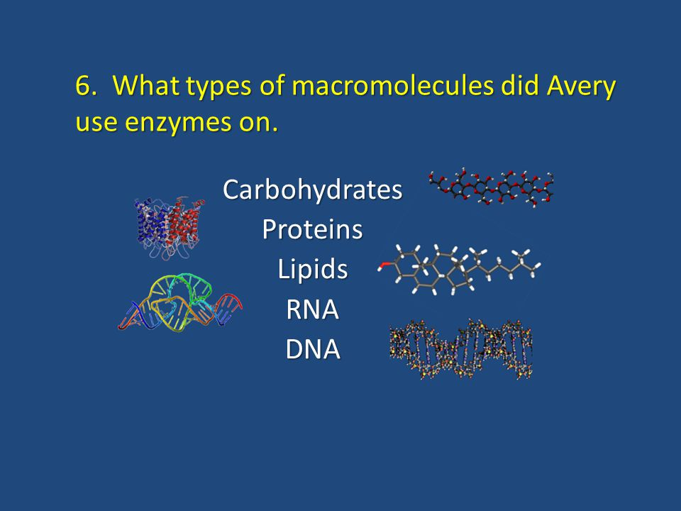6. What types of macromolecules did Avery use enzymes on. CarbohydratesProteinsLipidsRNADNA