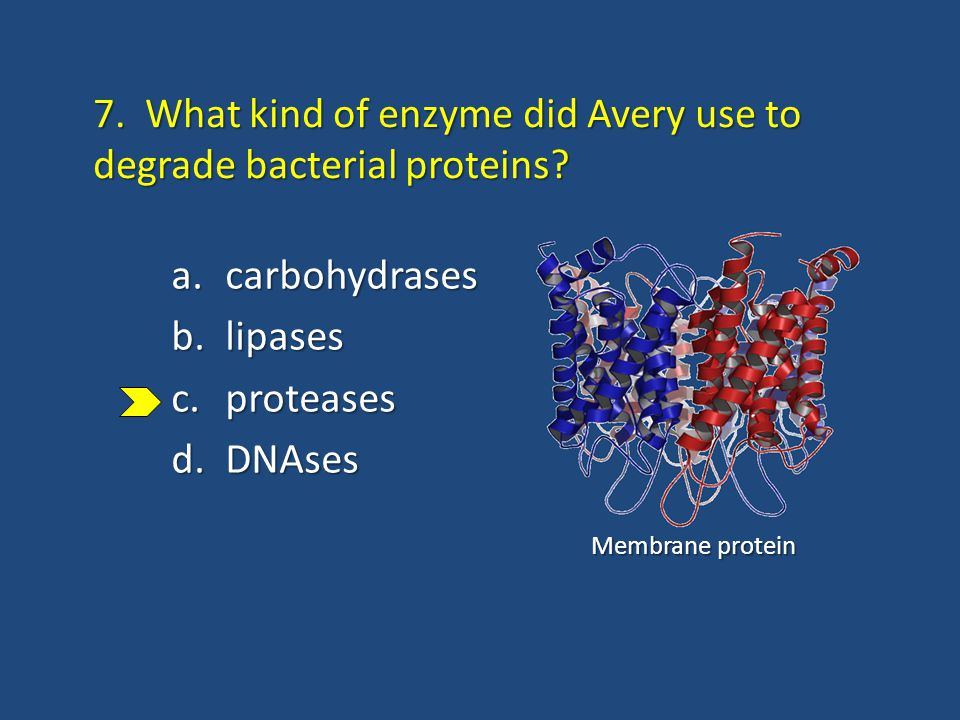 7. What kind of enzyme did Avery use to degrade bacterial proteins? a.carbohydrases b.lipases c.proteases d.DNAses Membrane protein