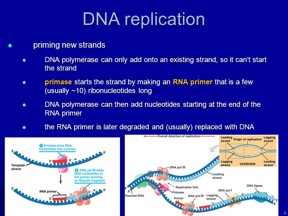 . DNA replication priming new strands priming new strands DNA polymerase can only add onto an existing strand, so it can't start the strand DNA polyme