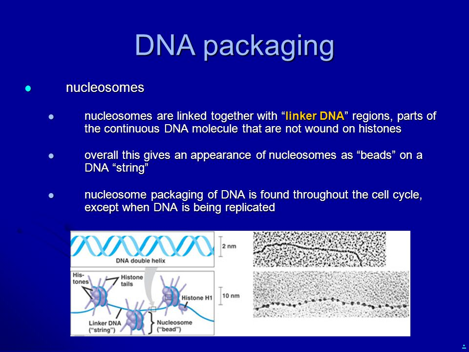 ". DNA packaging nucleosomes nucleosomes nucleosomes are linked together with ""linker DNA"" regions, parts of the continuous DNA molecule that are not w"
