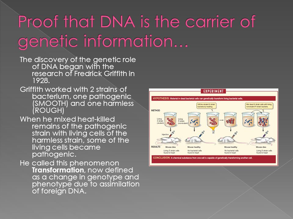 The discovery of the genetic role of DNA began with the research of Fredrick Griffith in 1928.