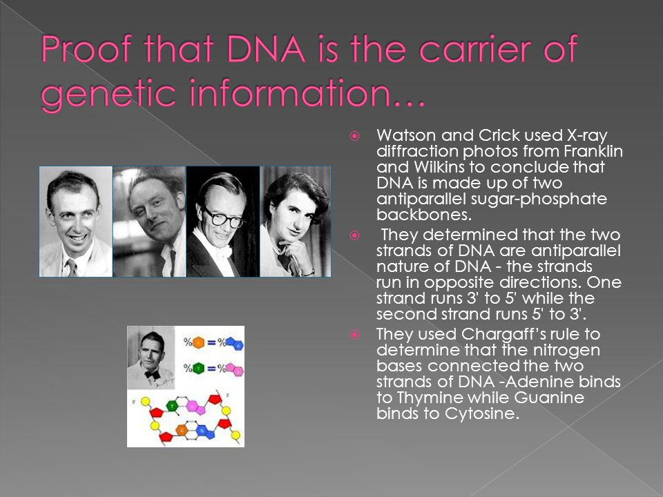  Watson and Crick used X-ray diffraction photos from Franklin and Wilkins to conclude that DNA is made up of two antiparallel sugar-phosphate backbon