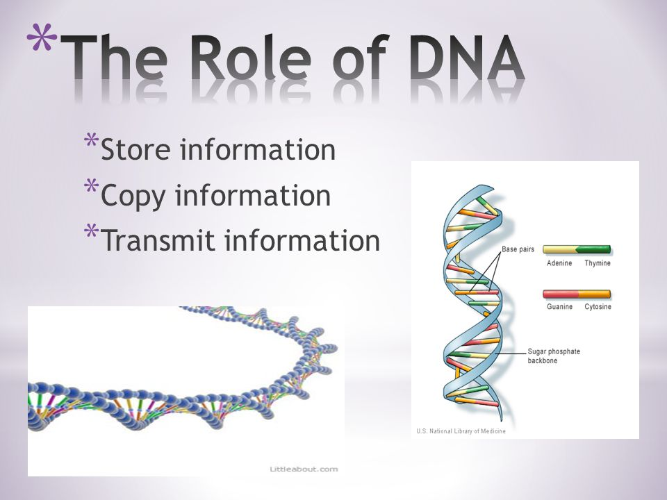 * Store information * Copy information * Transmit information
