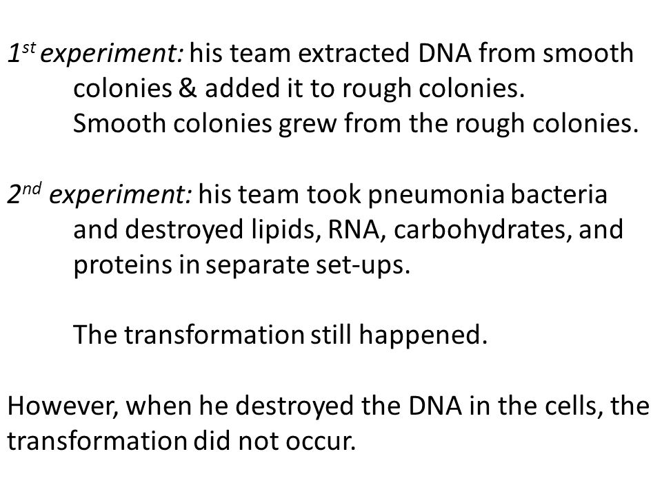1 st experiment: his team extracted DNA from smooth colonies & added it to rough colonies. Smooth colonies grew from the rough colonies. 2 nd experime