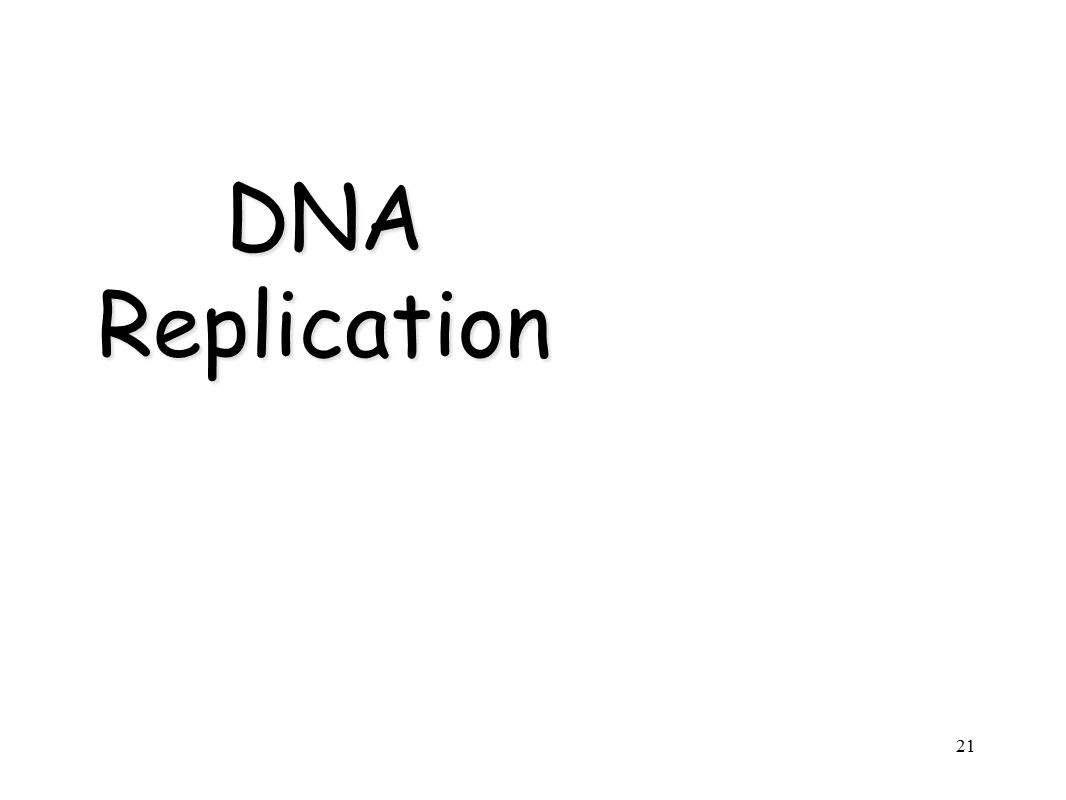 21 DNA Replication