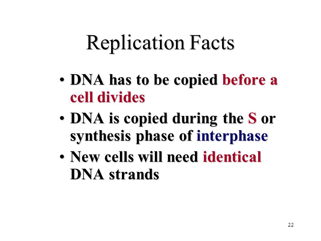 22 Replication Facts DNA has to be copied before a cell dividesDNA has to be copied before a cell divides DNA is copied during the S or synthesis phas
