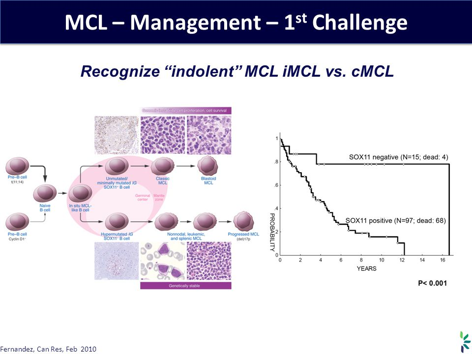 MCL – Management – 1 st Challenge Recognize indolent MCL iMCL vs.