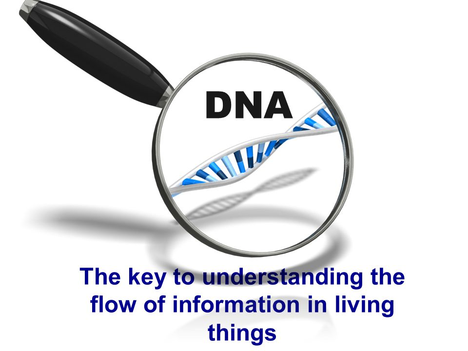 DNA The key to understanding the flow of information in living things