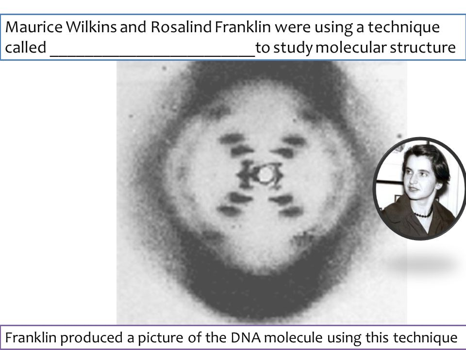 Maurice Wilkins and Rosalind Franklin were using a technique called ________________________to study molecular structure Franklin produced a picture of the DNA molecule using this technique