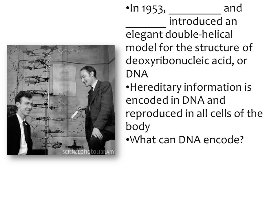 In 1953, _________ and _______ introduced an elegant double-helical model for the structure of deoxyribonucleic acid, or DNA Hereditary information is encoded in DNA and reproduced in all cells of the body What can DNA encode