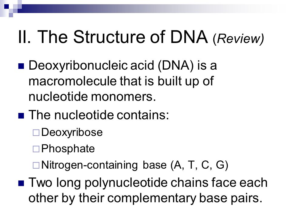 II. The Structure of DNA (Review) Deoxyribonucleic acid (DNA) is a macromolecule that is built up of nucleotide monomers. The nucleotide contains:  D