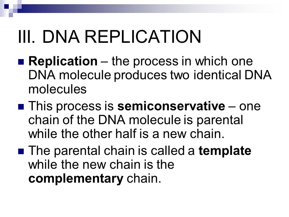 III. DNA REPLICATION Replication – the process in which one DNA molecule produces two identical DNA molecules This process is semiconservative – one c