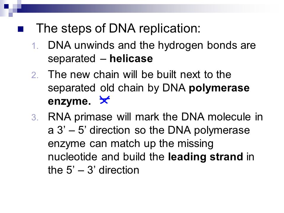 The steps of DNA replication: 1. DNA unwinds and the hydrogen bonds are separated – helicase 2.