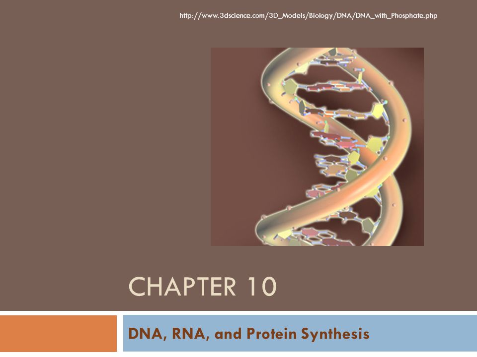 CHAPTER 10 DNA, RNA, and Protein Synthesis http://www.3dscience.com/3D_Models/Biology/DNA/DNA_with_Phosphate.php