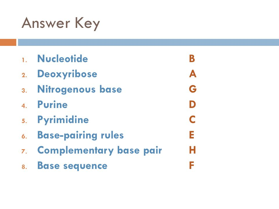 Answer Key 1.NucleotideB 2. DeoxyriboseA 3. Nitrogenous baseG 4.