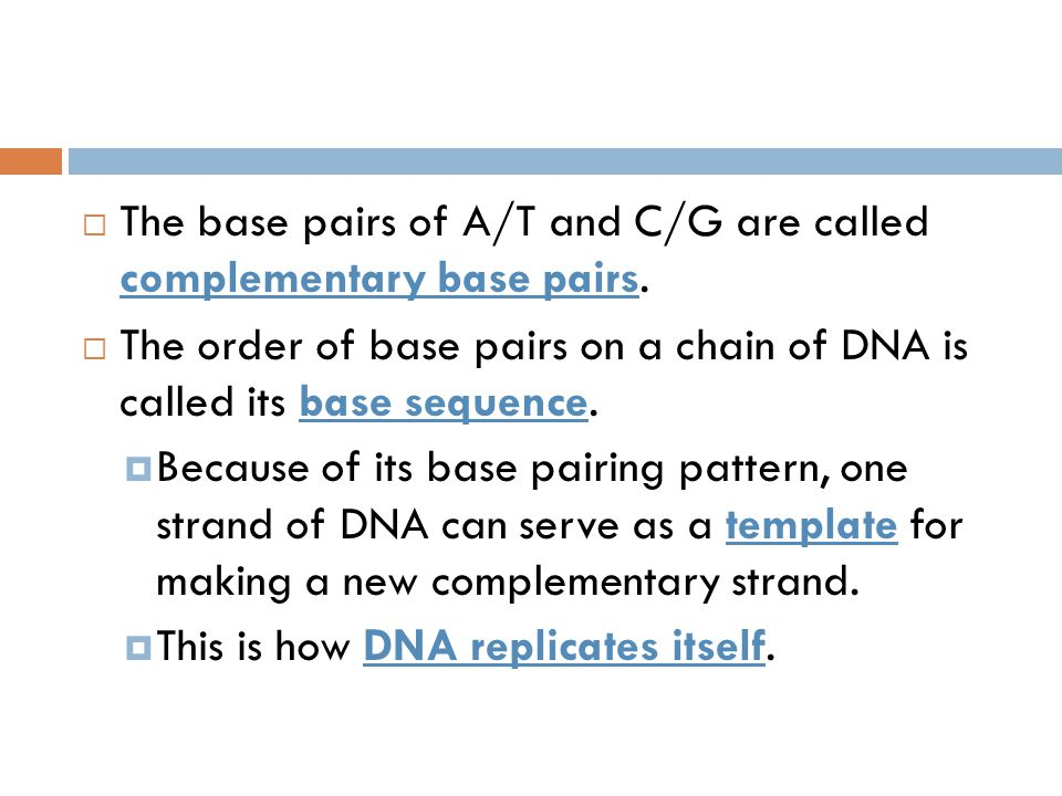  The base pairs of A/T and C/G are called complementary base pairs.