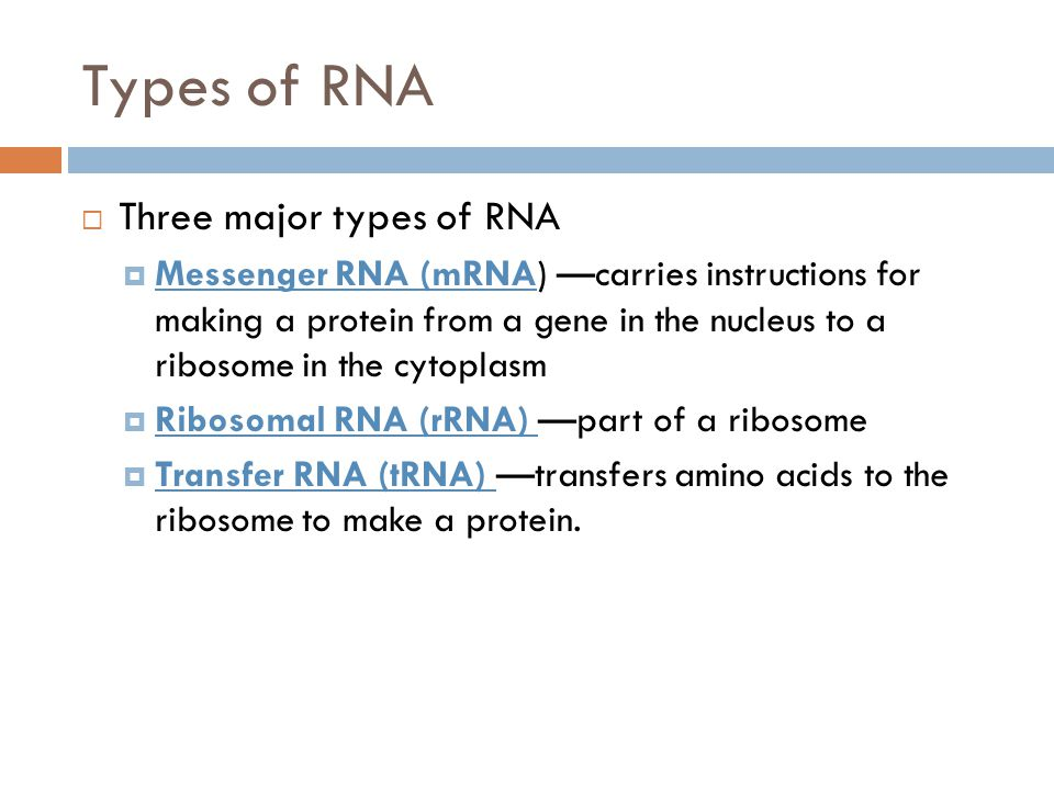 Types of RNA  Three major types of RNA  Messenger RNA (mRNA) —carries instructions for making a protein from a gene in the nucleus to a ribosome in the cytoplasm  Ribosomal RNA (rRNA) —part of a ribosome  Transfer RNA (tRNA) —transfers amino acids to the ribosome to make a protein.