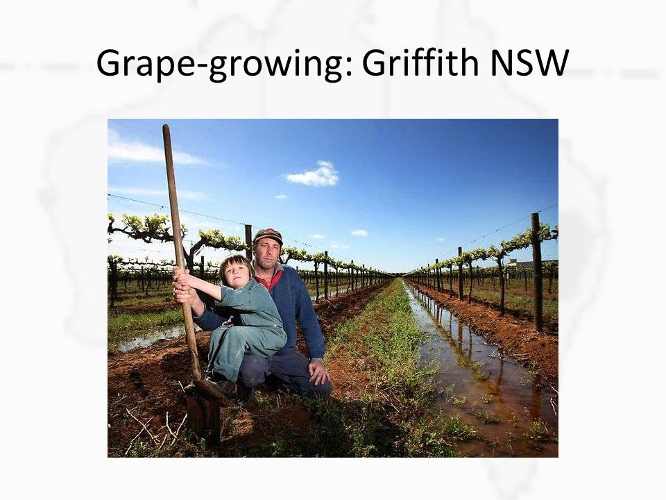 Grape-growing: Griffith NSW