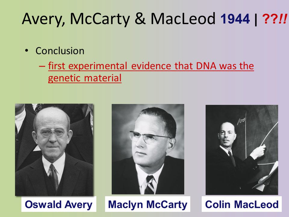 DNA is the Transforming Principle Avery, McCarty & MacLeod – Purified DNA & proteins from Streptococcus pneumonia bacteria – injected protein into bacteria no effect – injected DNA into bacteria transformed harmless bacteria into virulent bacteria 1944 What's the conclusion.