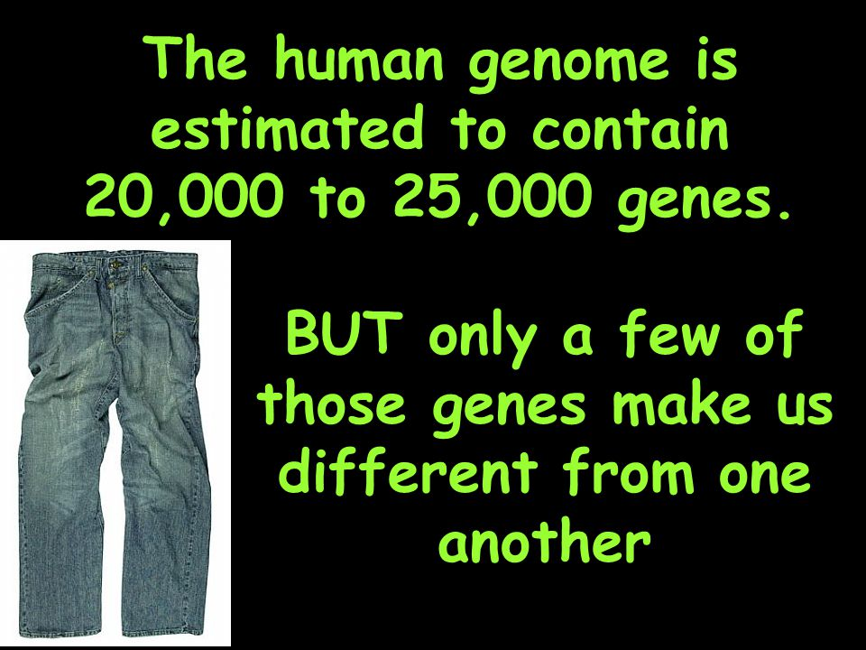 The human genome is estimated to contain 20,000 to 25,000 genes.