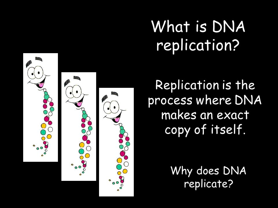 What is DNA replication. Replication is the process where DNA makes an exact copy of itself.