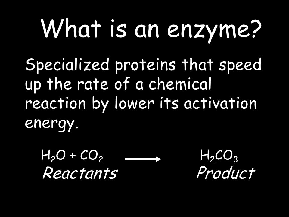 H 2 O + CO 2 H 2 CO 3 ReactantsProduct What is an enzyme.
