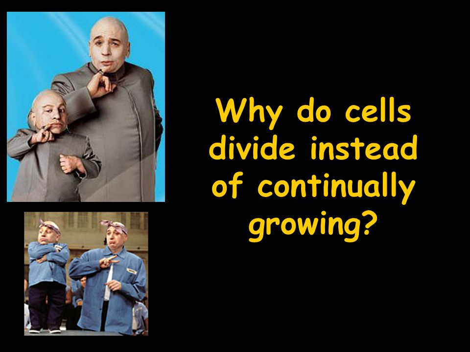 Why do cells divide instead of continually growing
