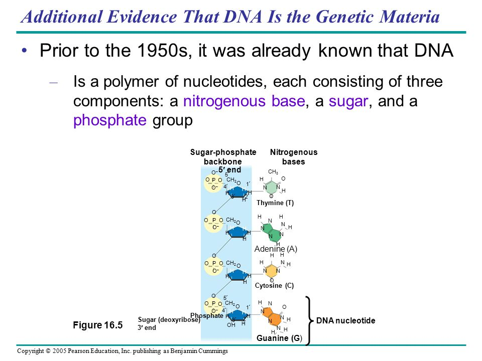 Copyright © 2005 Pearson Education, Inc. publishing as Benjamin Cummings Additional Evidence That DNA Is the Genetic Materia Prior to the 1950s, it wa