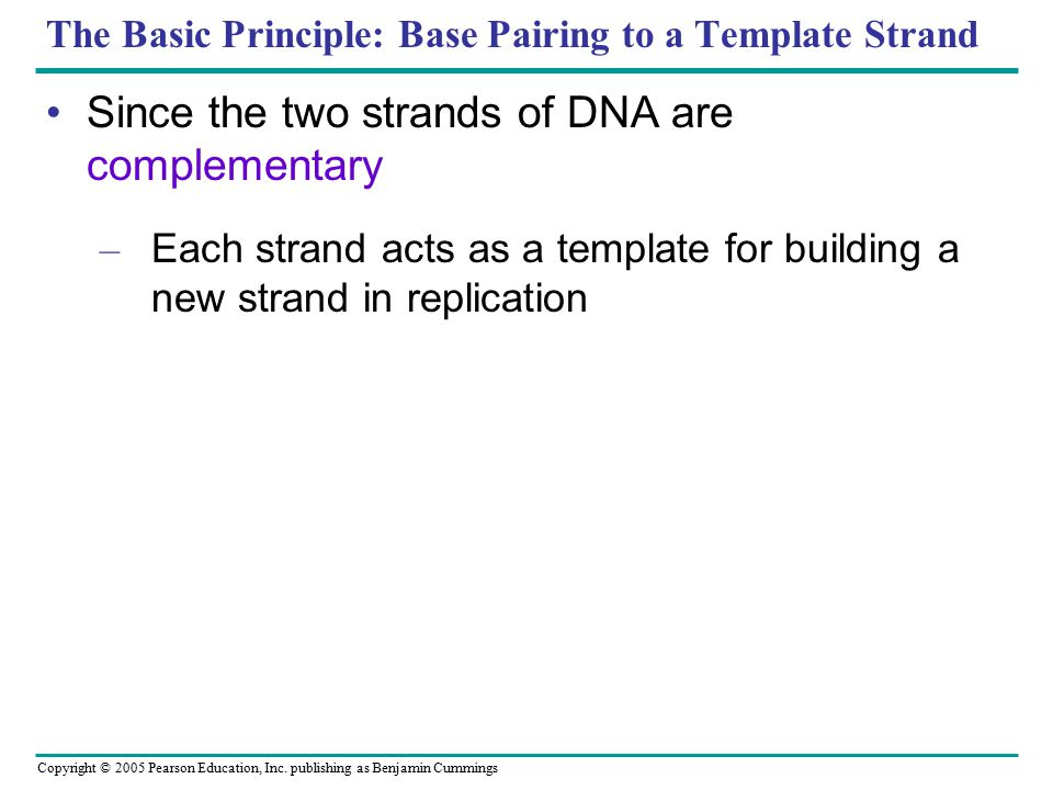 Copyright © 2005 Pearson Education, Inc. publishing as Benjamin Cummings The Basic Principle: Base Pairing to a Template Strand Since the two strands