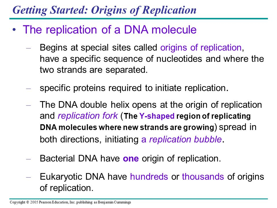 Copyright © 2005 Pearson Education, Inc. publishing as Benjamin Cummings Getting Started: Origins of Replication The replication of a DNA molecule – B