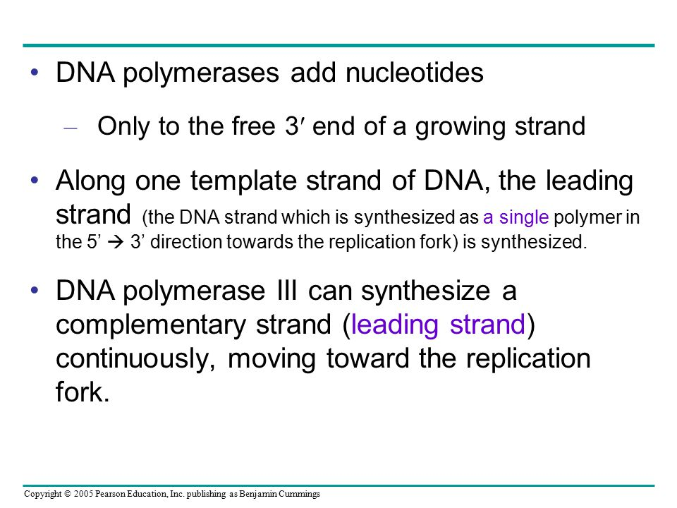 Copyright © 2005 Pearson Education, Inc. publishing as Benjamin Cummings DNA polymerases add nucleotides – Only to the free 3  end of a growing stra