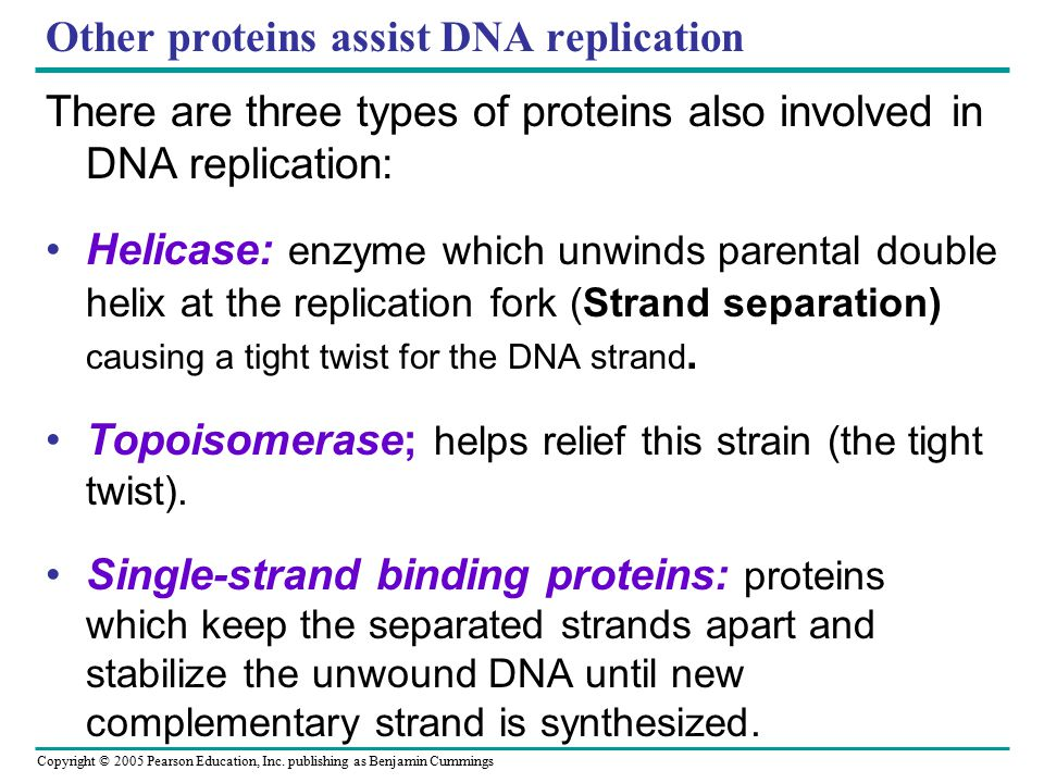 Copyright © 2005 Pearson Education, Inc. publishing as Benjamin Cummings Other proteins assist DNA replication There are three types of proteins also
