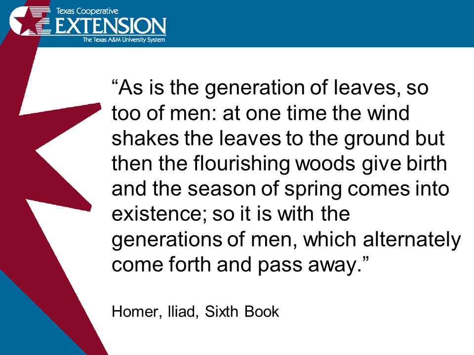 As is the generation of leaves, so too of men: at one time the wind shakes the leaves to the ground but then the flourishing woods give birth and the season of spring comes into existence; so it is with the generations of men, which alternately come forth and pass away. Homer, lliad, Sixth Book