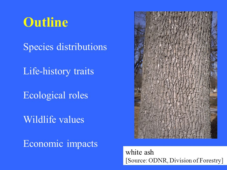 Outline Species distributions Life-history traits Ecological roles Wildlife values Economic impacts white ash [Source: ODNR, Division of Forestry]