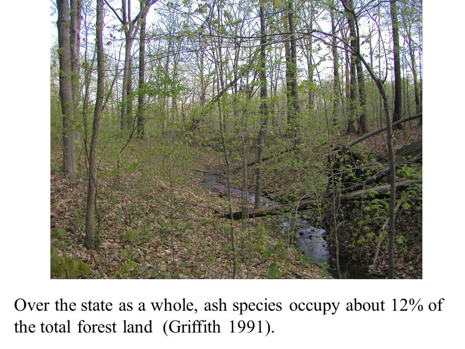 Over the state as a whole, ash species occupy about 12% of the total forest land (Griffith 1991).