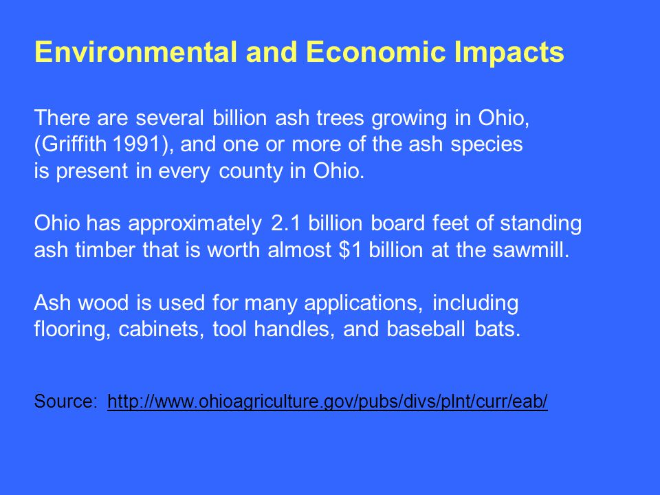 Environmental and Economic Impacts There are several billion ash trees growing in Ohio, (Griffith 1991), and one or more of the ash species is present in every county in Ohio.