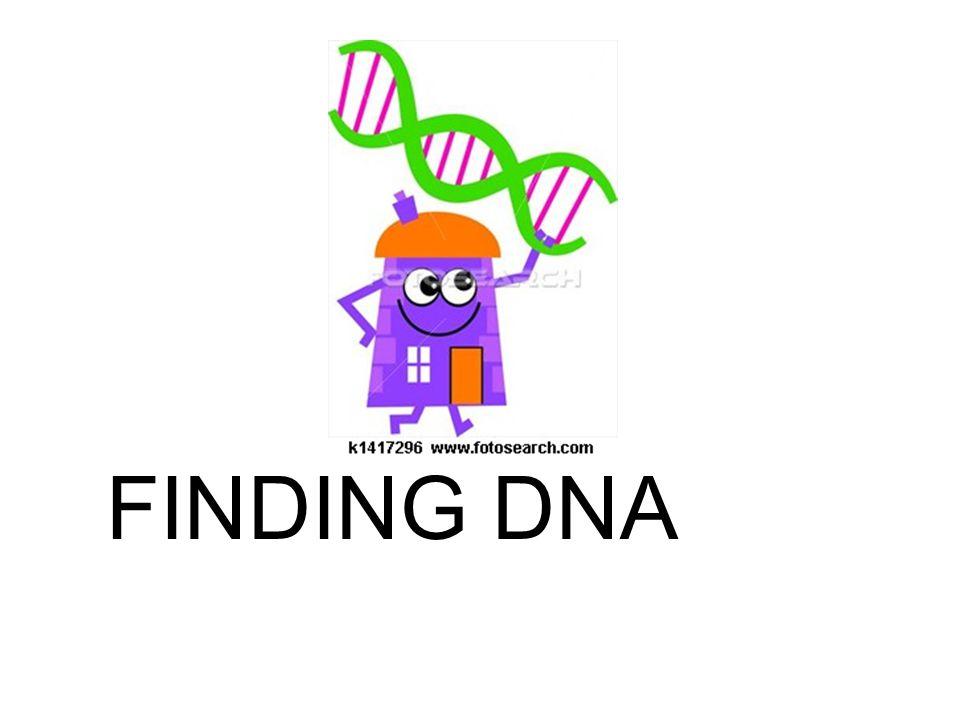 DNA Geek
