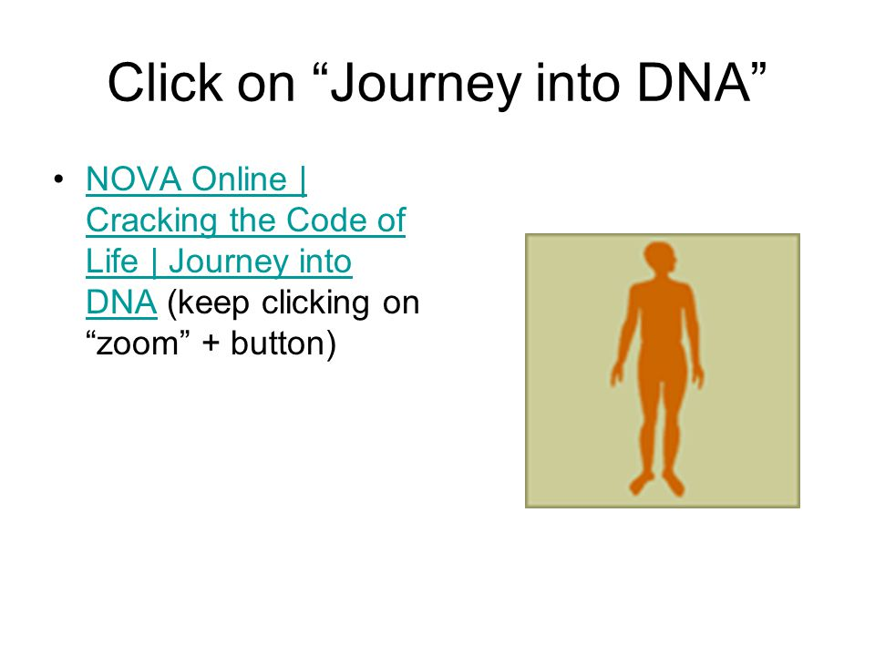 Click on Journey into DNA NOVA Online | Cracking the Code of Life | Journey into DNA (keep clicking on zoom + button)NOVA Online | Cracking the Code of Life | Journey into DNA