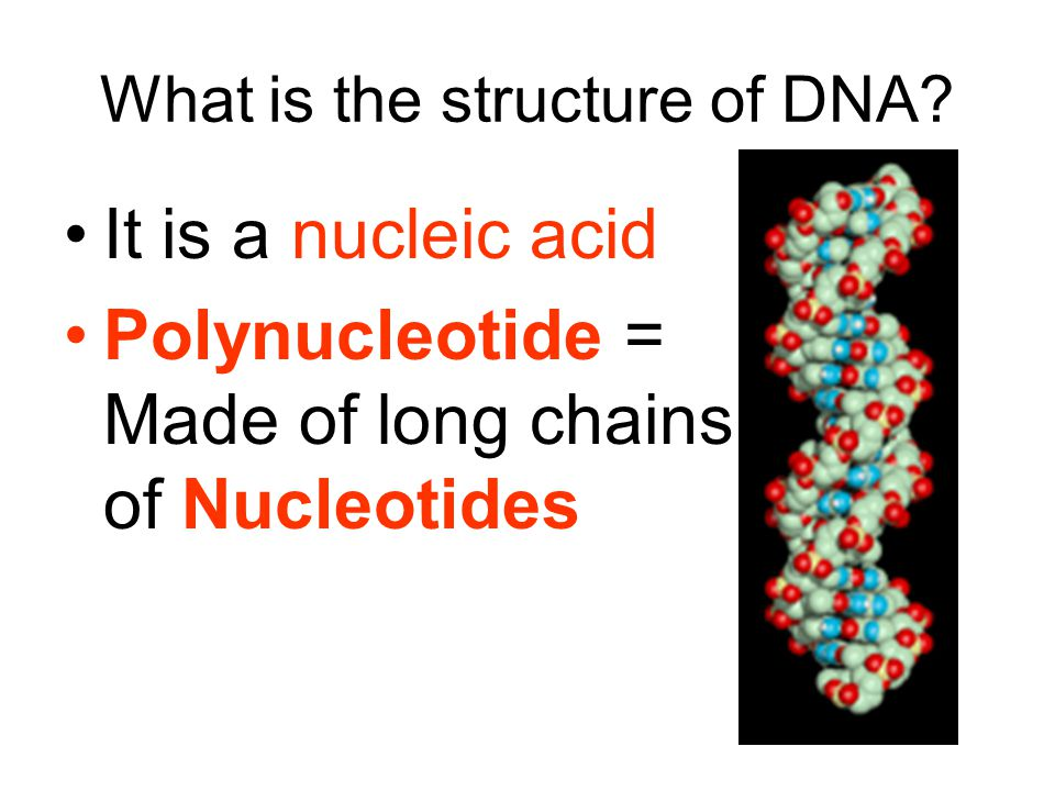 What is the structure of DNA.