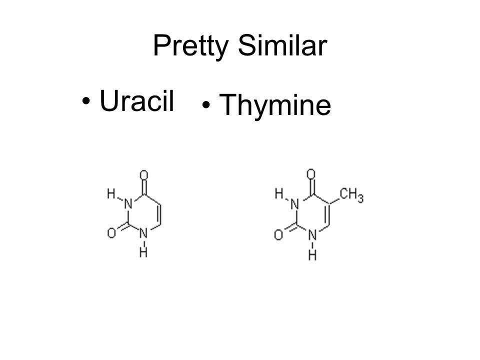 Pretty Similar Uracil Thymine
