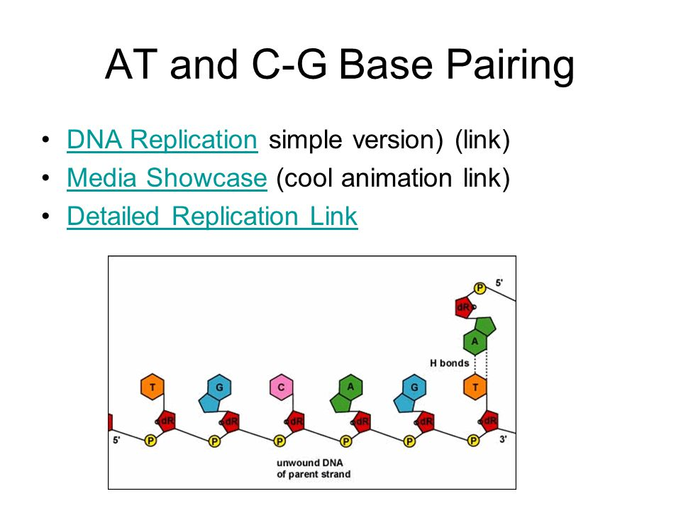 AT and C-G Base Pairing DNA Replication simple version) (link)DNA Replication Media Showcase (cool animation link)Media Showcase Detailed Replication Link