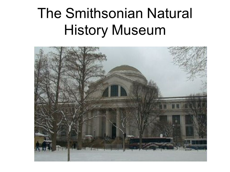 The Smithsonian Natural History Museum