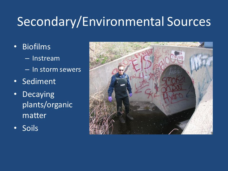 Secondary/Environmental Sources Biofilms – Instream – In storm sewers Sediment Decaying plants/organic matter Soils