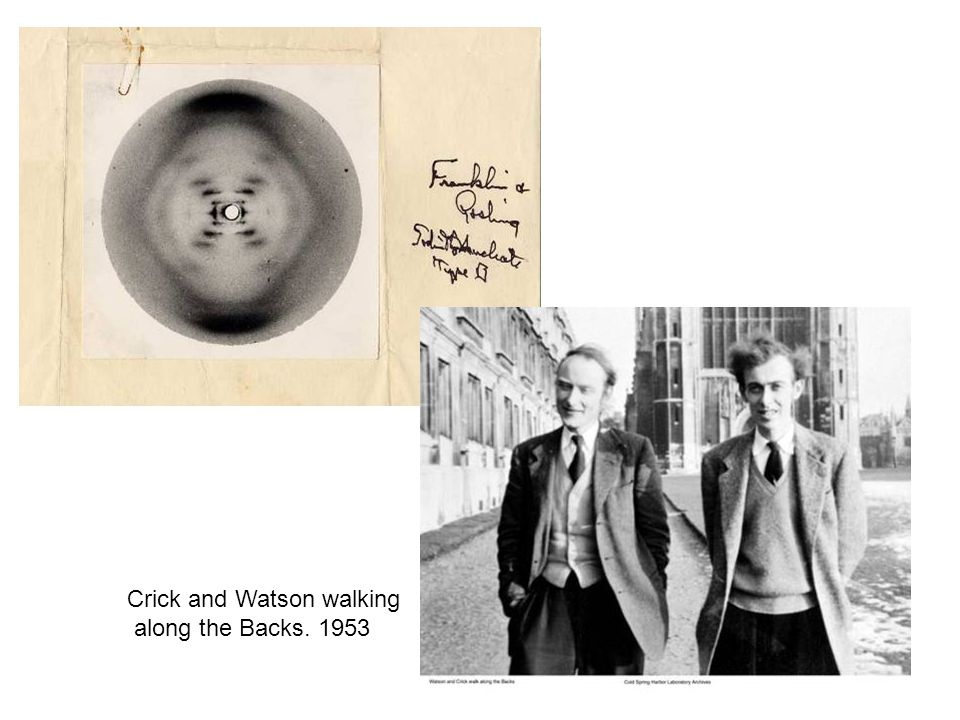 Crick and Watson walking along the Backs. 1953
